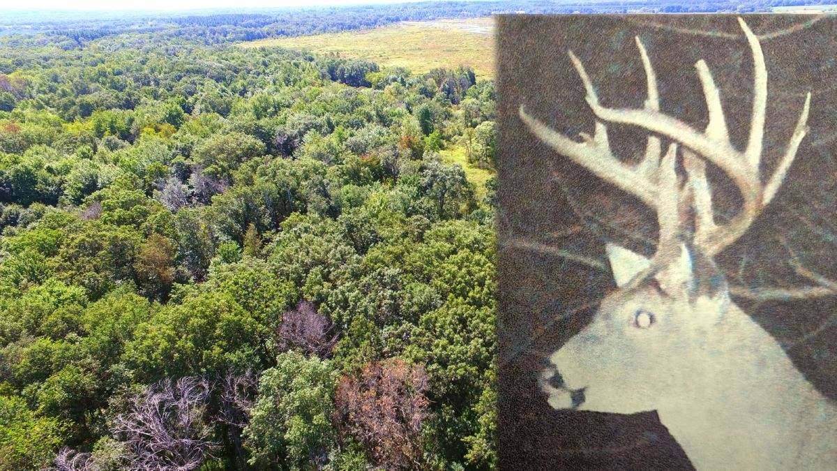 Turn-key Wisconsin Trophy Deer Hunting Land Marquette County