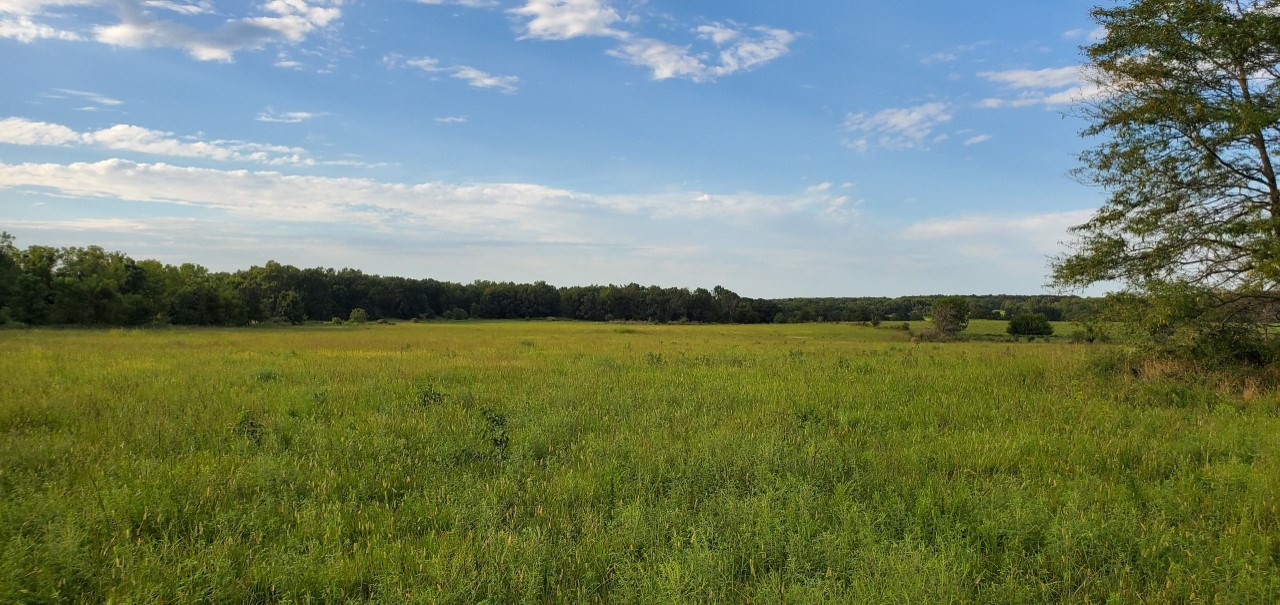 Hunting Land For Sale West Dade 112 in Greenfield, Mo