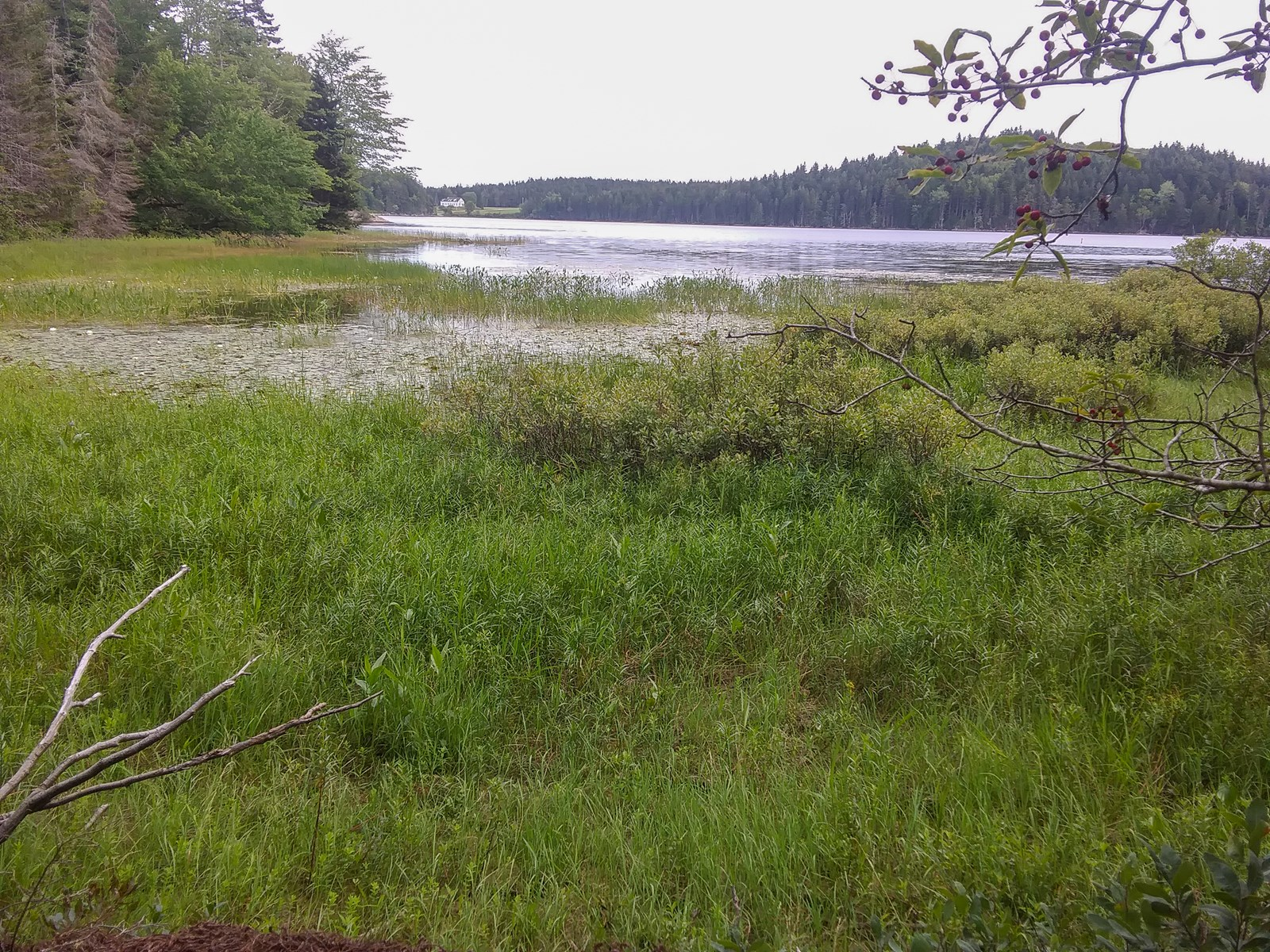 Lakefront Land For Sale in Washington County, Maine