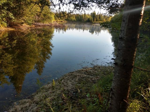 140 Acres with Pond for sale in Atlanta MI