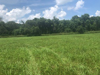 Riverfront Property in Ozark County - Vacant Land