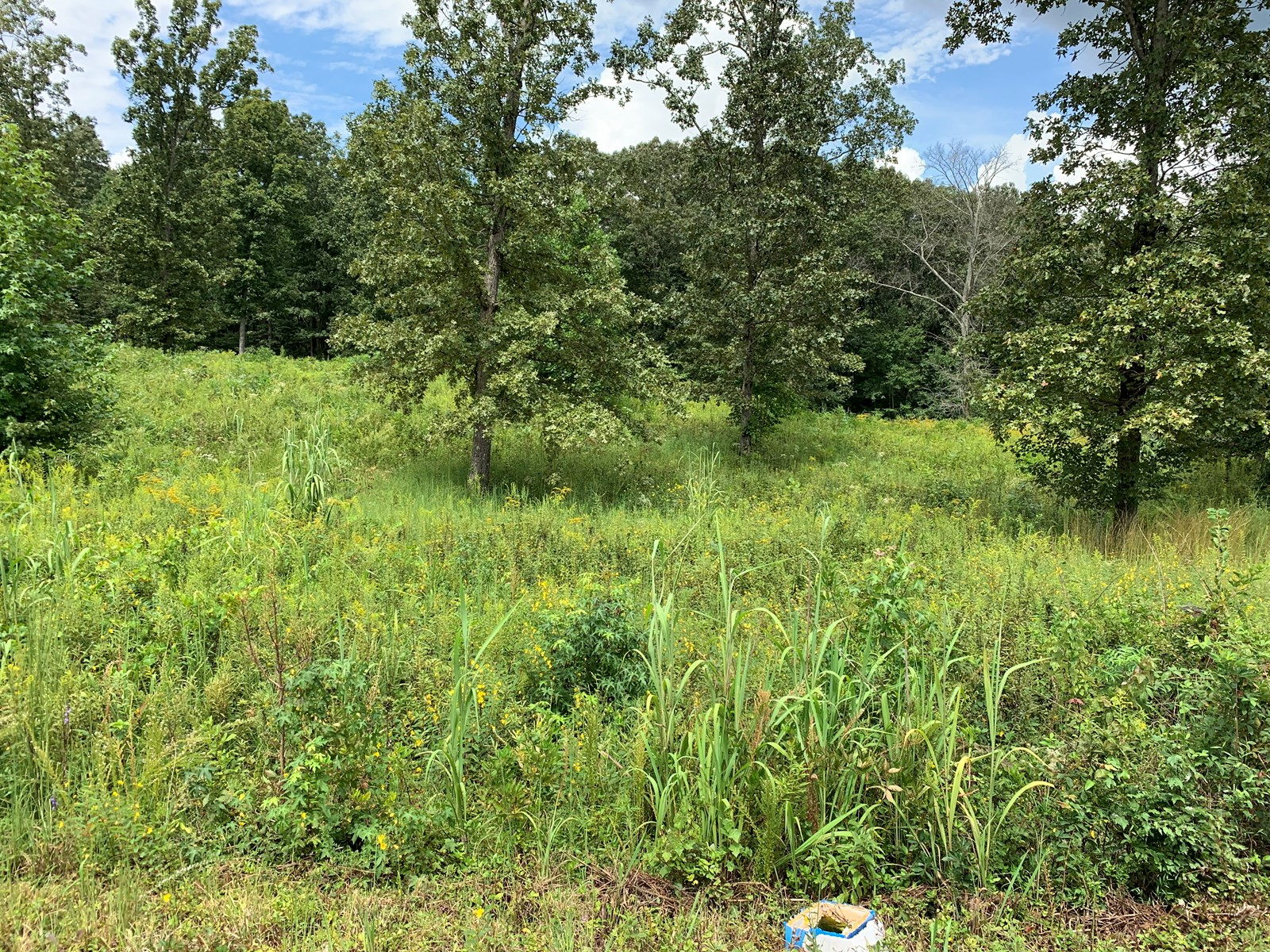 Land for Sale in TN!