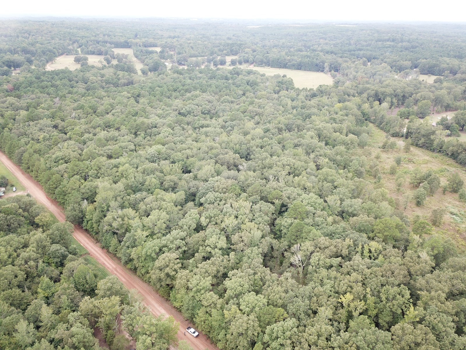 East Texas, Property, Timber, Hunting, Land, For Sale