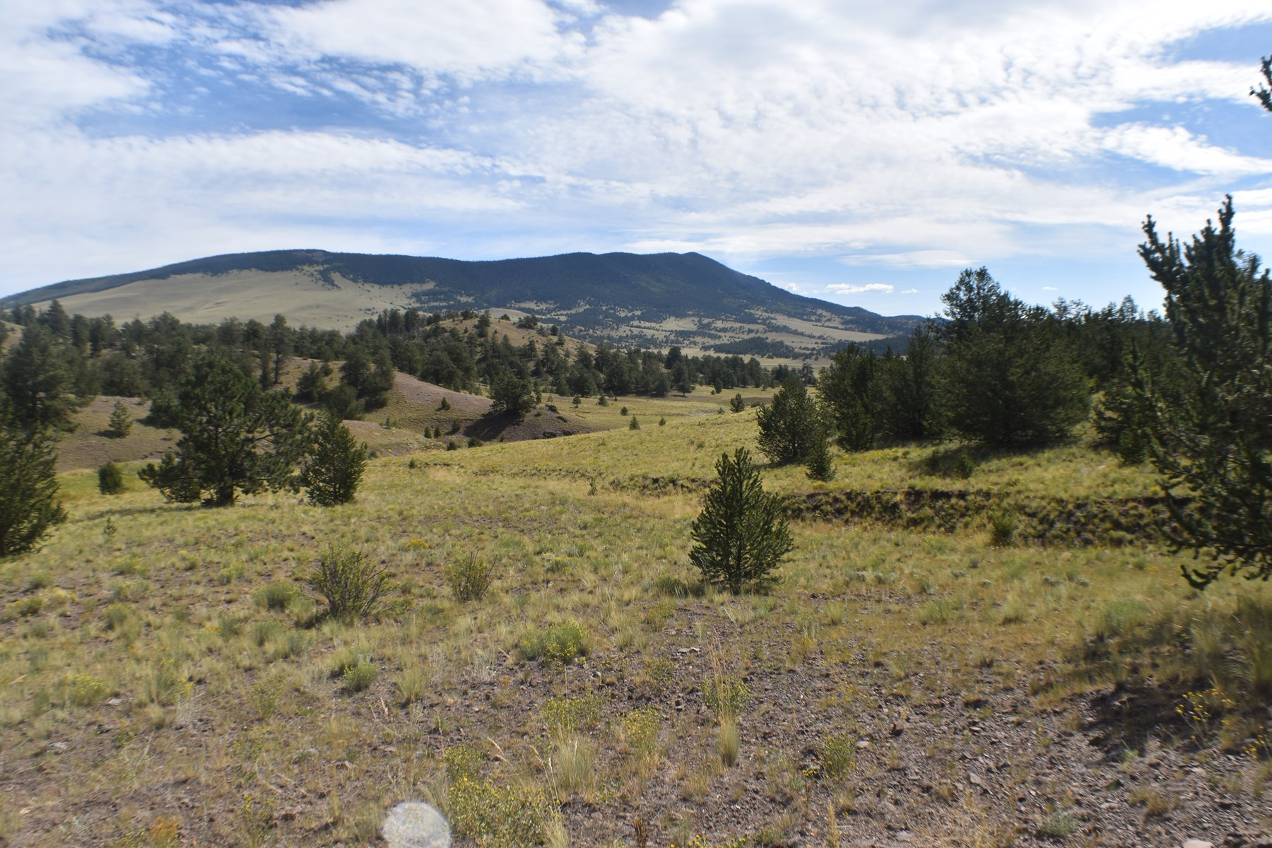 Colorado Ranch Land for Sale bordering National Forest