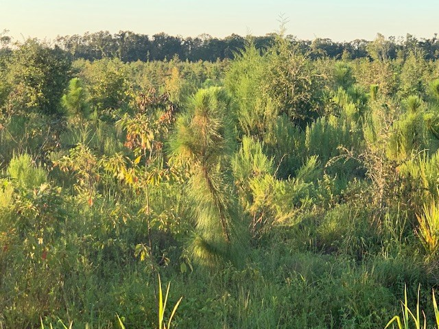 Land For Sale in Jackson County, Florida