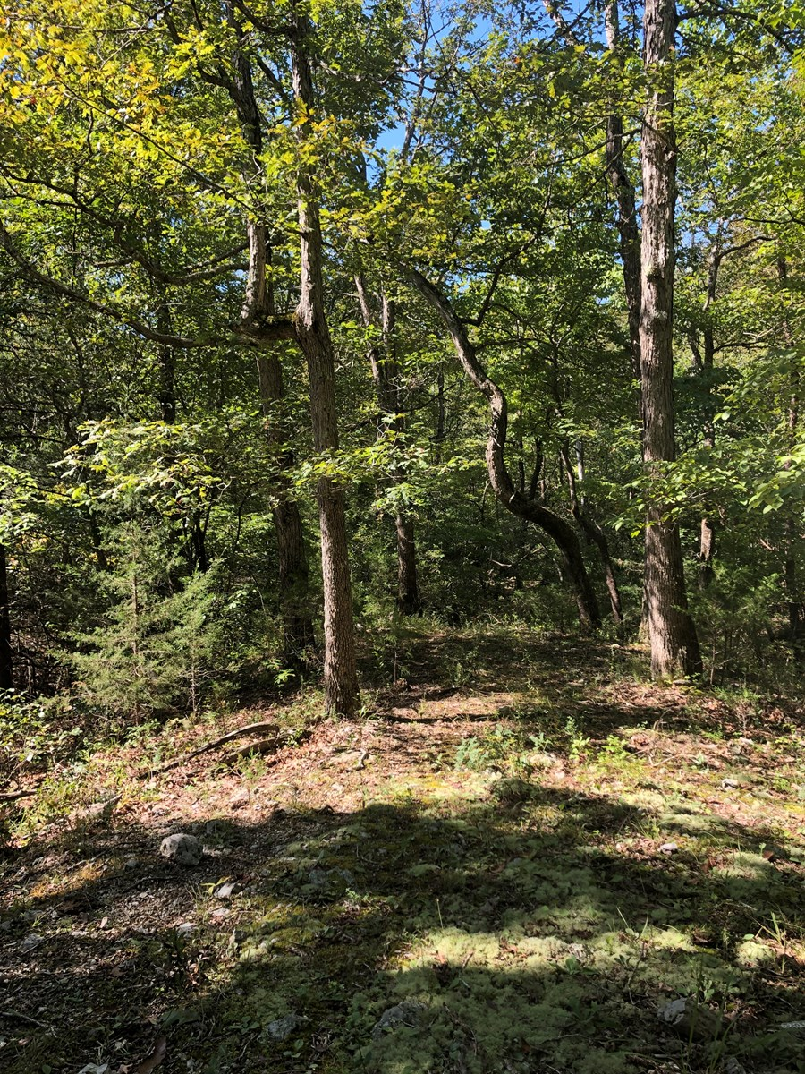 Hunting and Recreation Land for Sale in Southern MO Ozarks