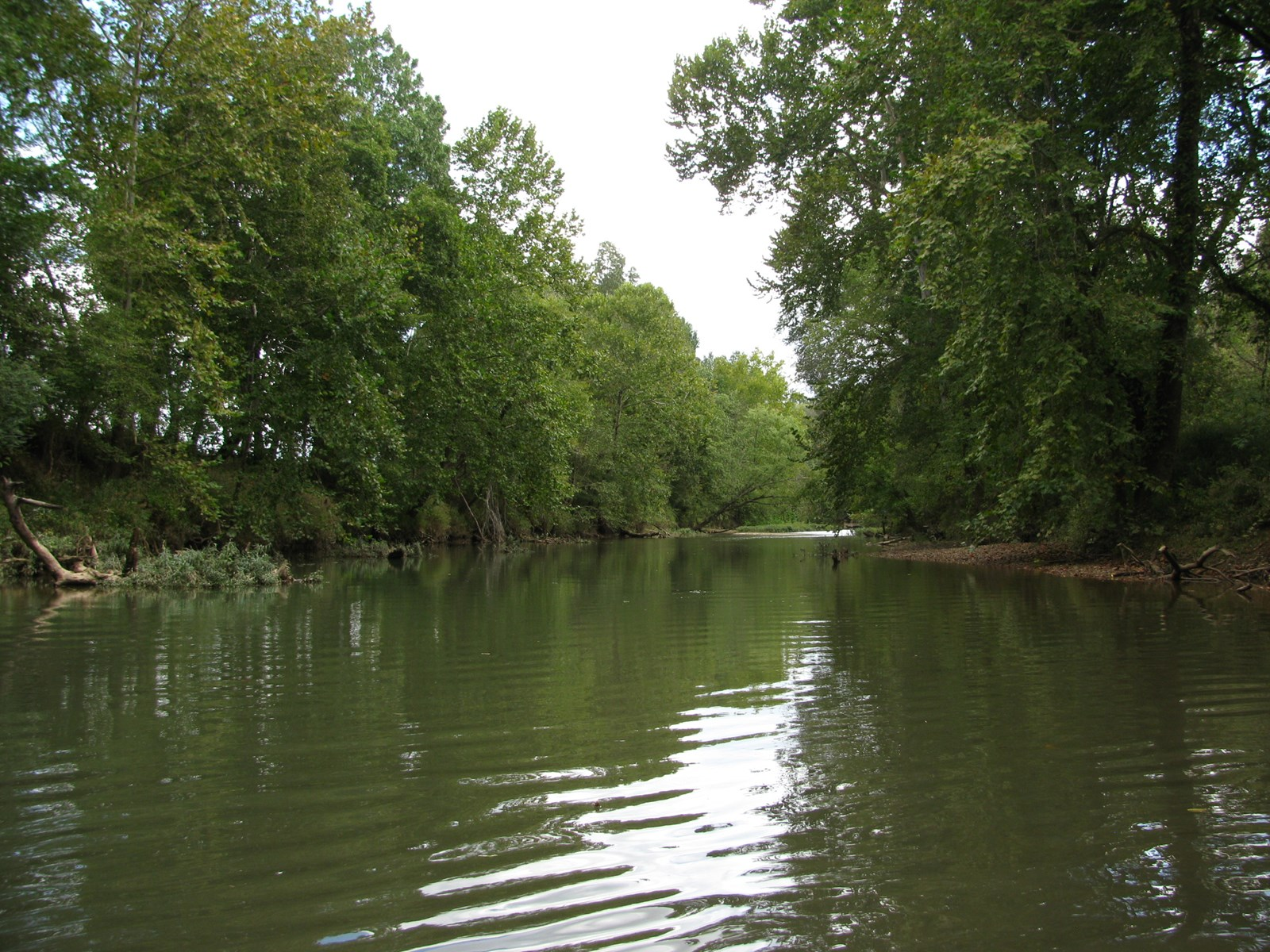 GREAT FISHING ON INDIAN CREEK LAND FOR SALE IN TN