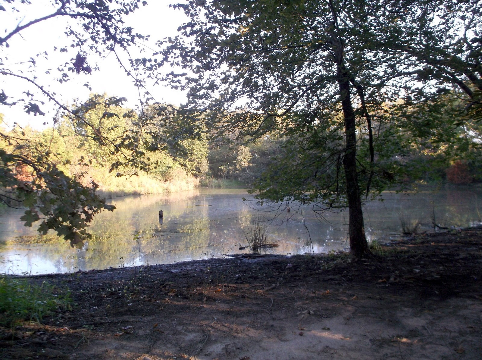 OVER 81 ACRES - HUNT - FARM - BUILD HERE - EAST TEXAS LAND