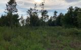 5 acres in Rural O'Brien Florida