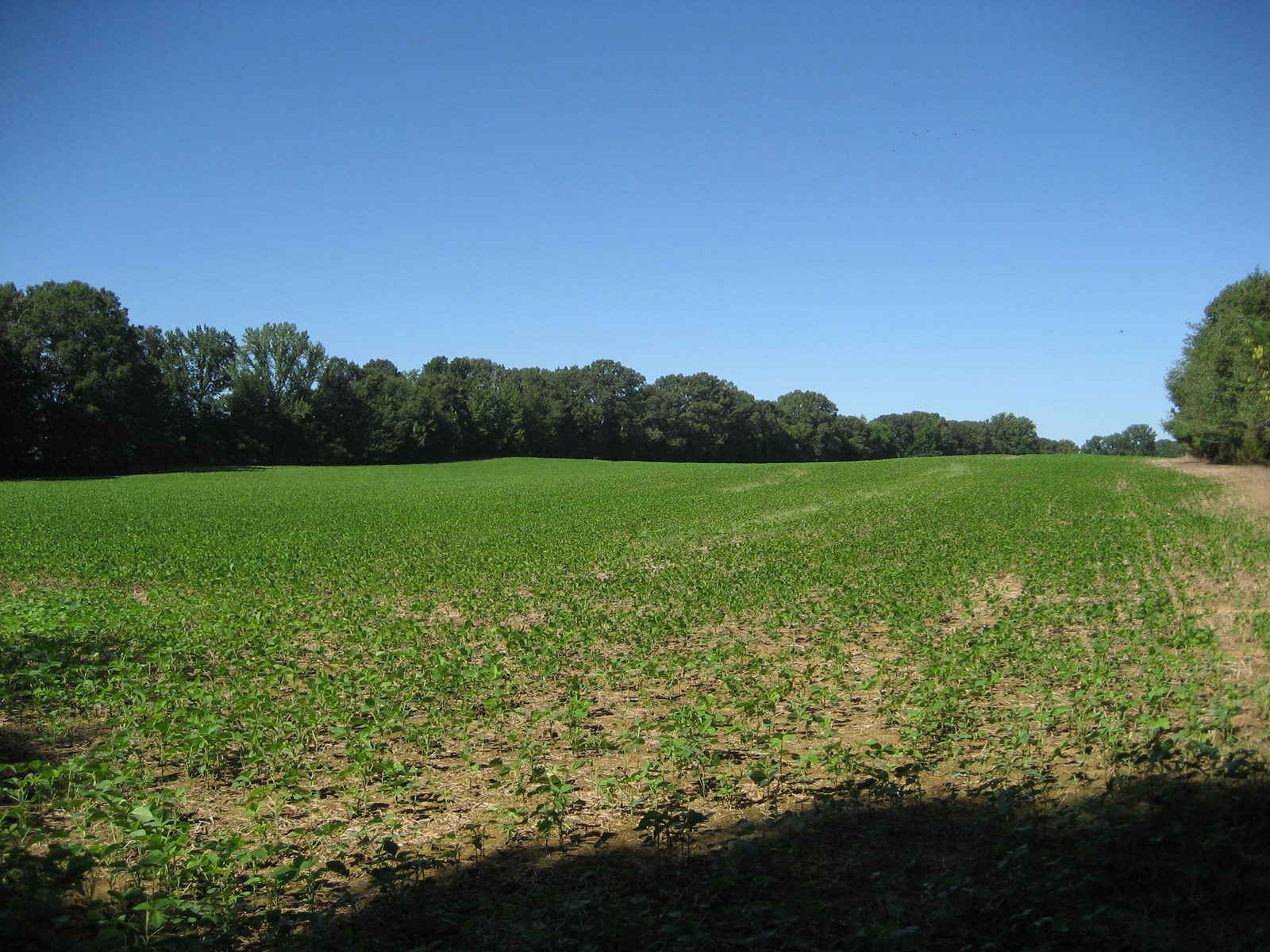 FARM FOR SALE IN TN, ROW CROP FARM, LAKE, NO RESTRICTIONS