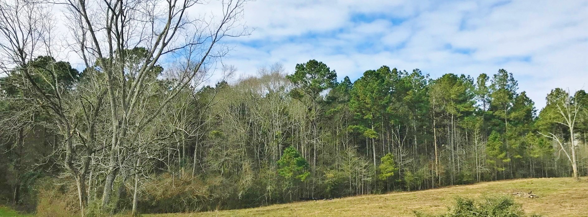 78 Acres Timberland Investment Property for Sale Seminary MS