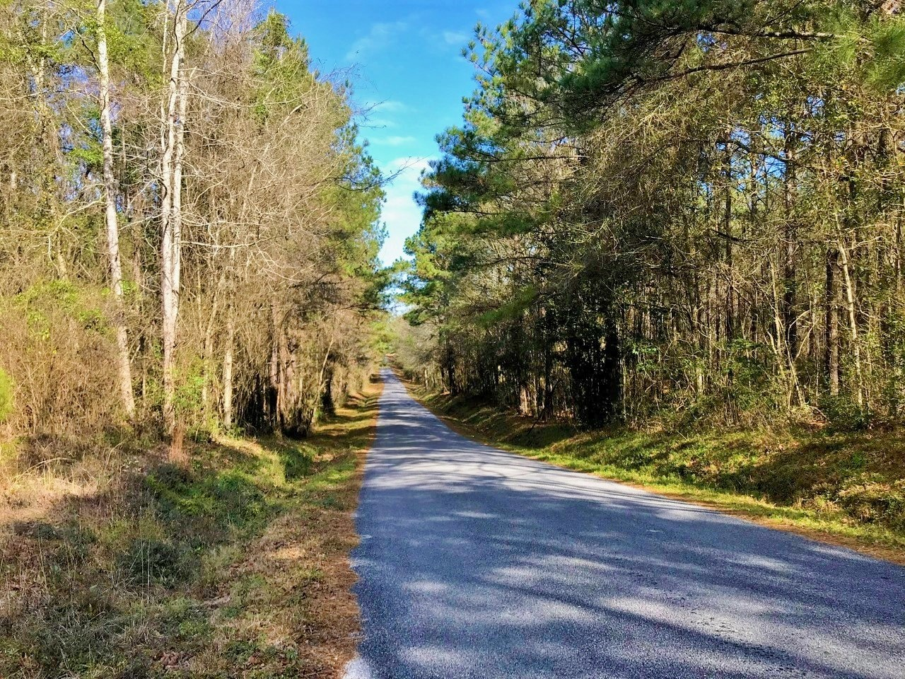 82 Acres Timberland Investment Property for Sale Seminary MS