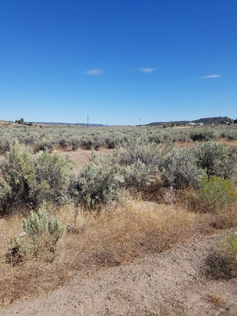 Acres of Build-able Country Land in Northeastern Ca.