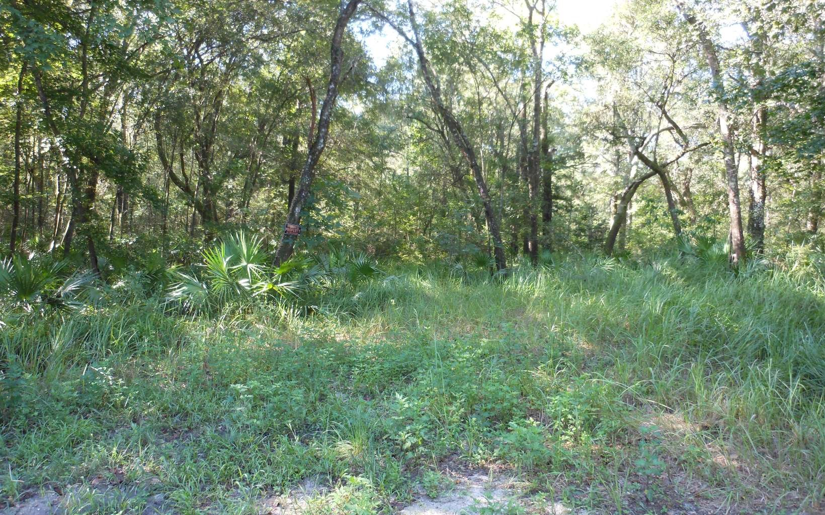 Beautifully wooded parcel with lots of privacy.