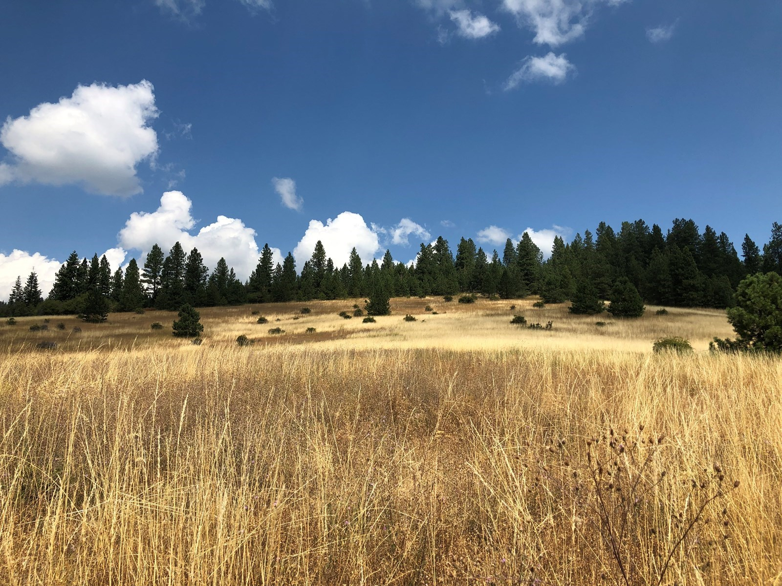 North Idaho Land For Sale Near Coeur d'Alene