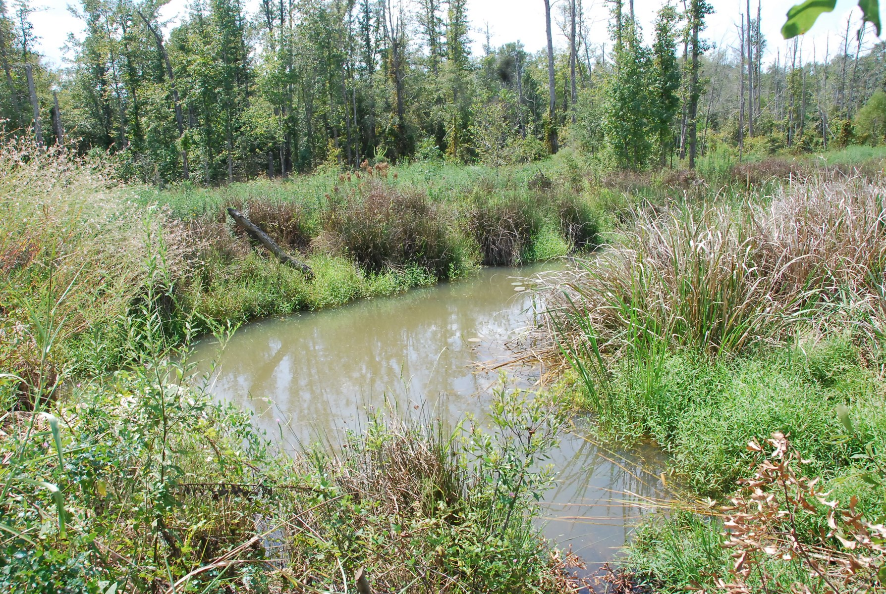 Texas Deer Duck Hunting Land for Sale Smith County