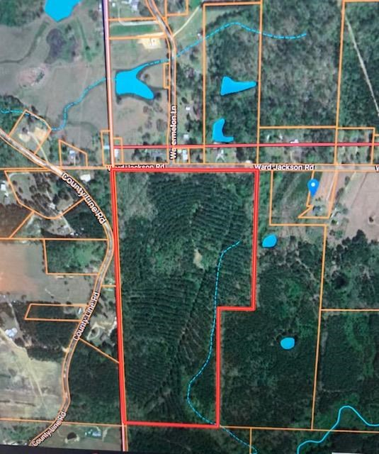 70 Acres Timberland For Sale Pike County McComb Mississippi