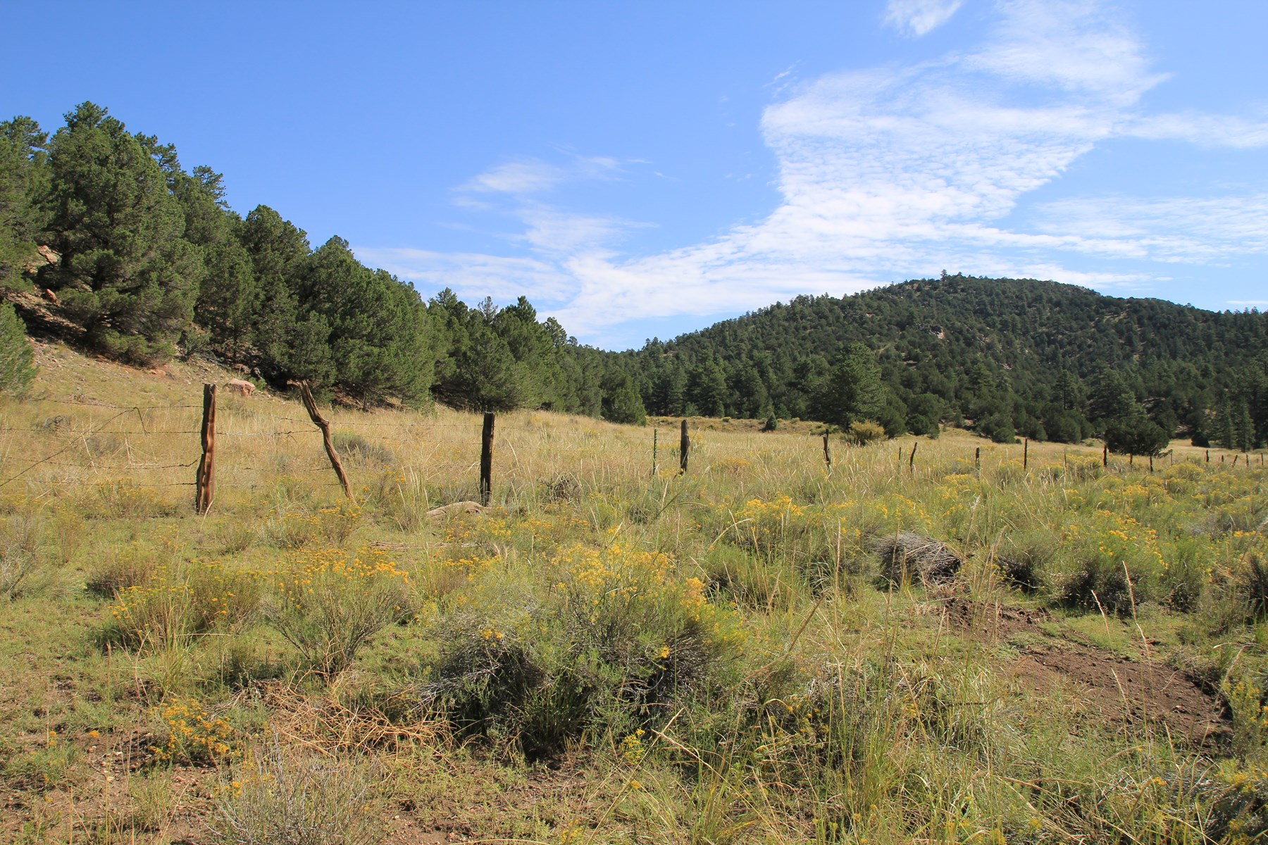 28+ Acres in Custer County Westcliffe, CO