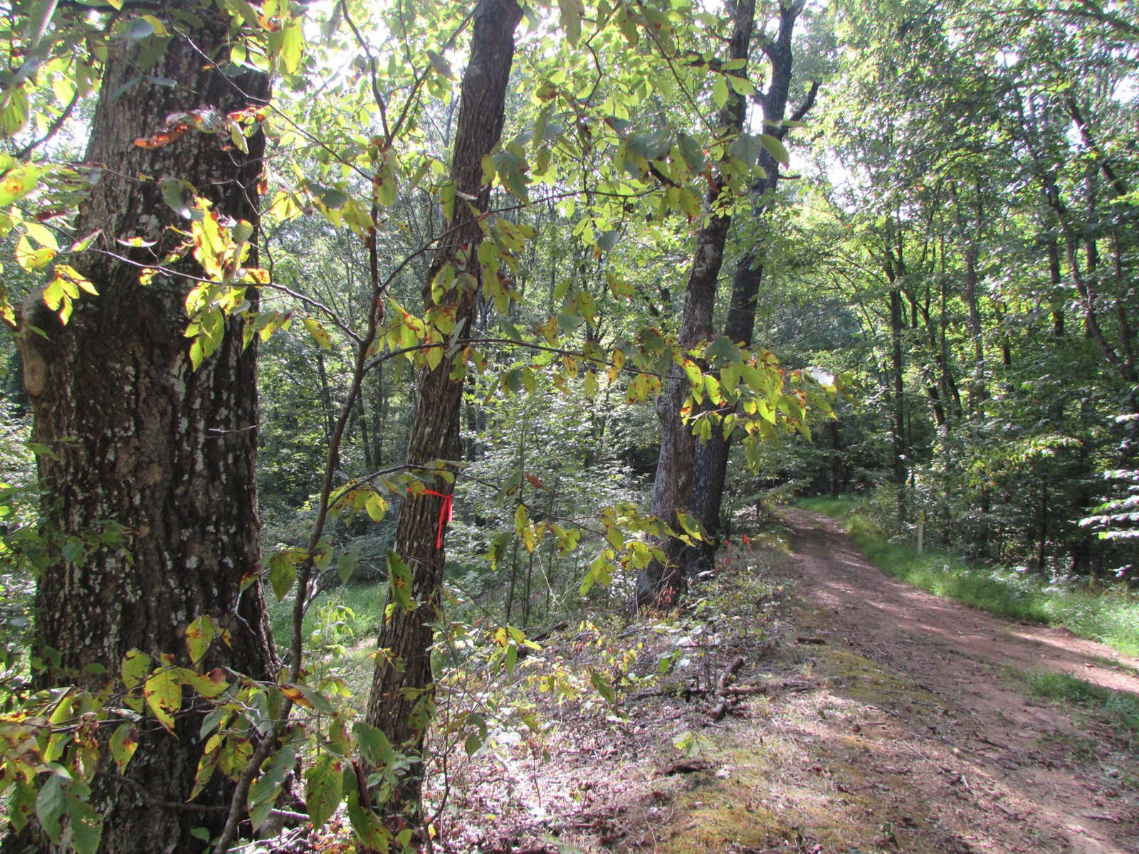 Great Hunting Location located in Doddridge County, WV