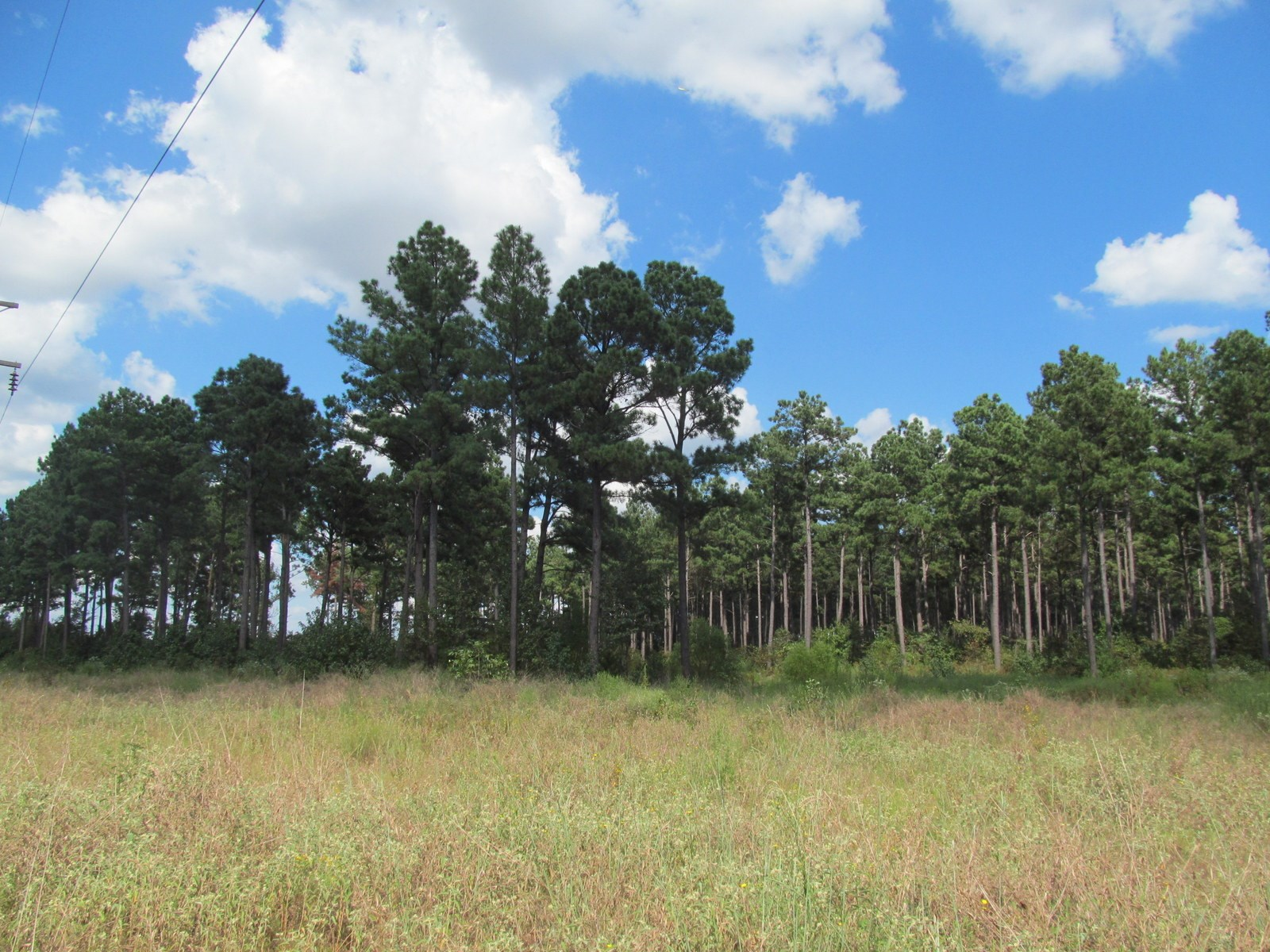 99 ACRE TEXAS PINE TREE FARM - CAMP COUNTY TEXAS - PITTSBURG