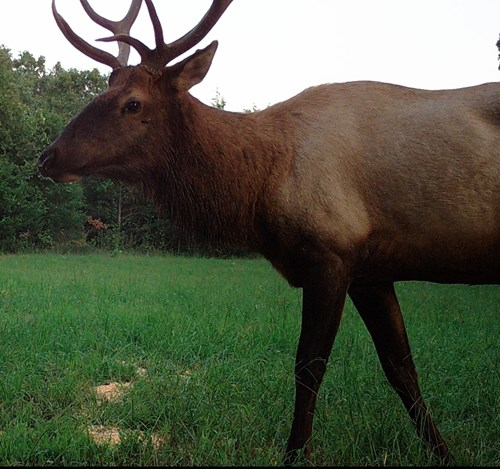 Hunting & Recreational Land For Sale in Carroll/Boone County