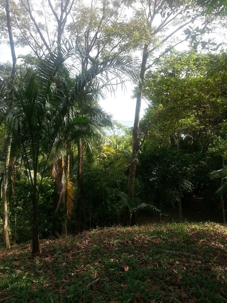 Affordable, Buildable lot Isla Solarte Bocas del Toro Panama