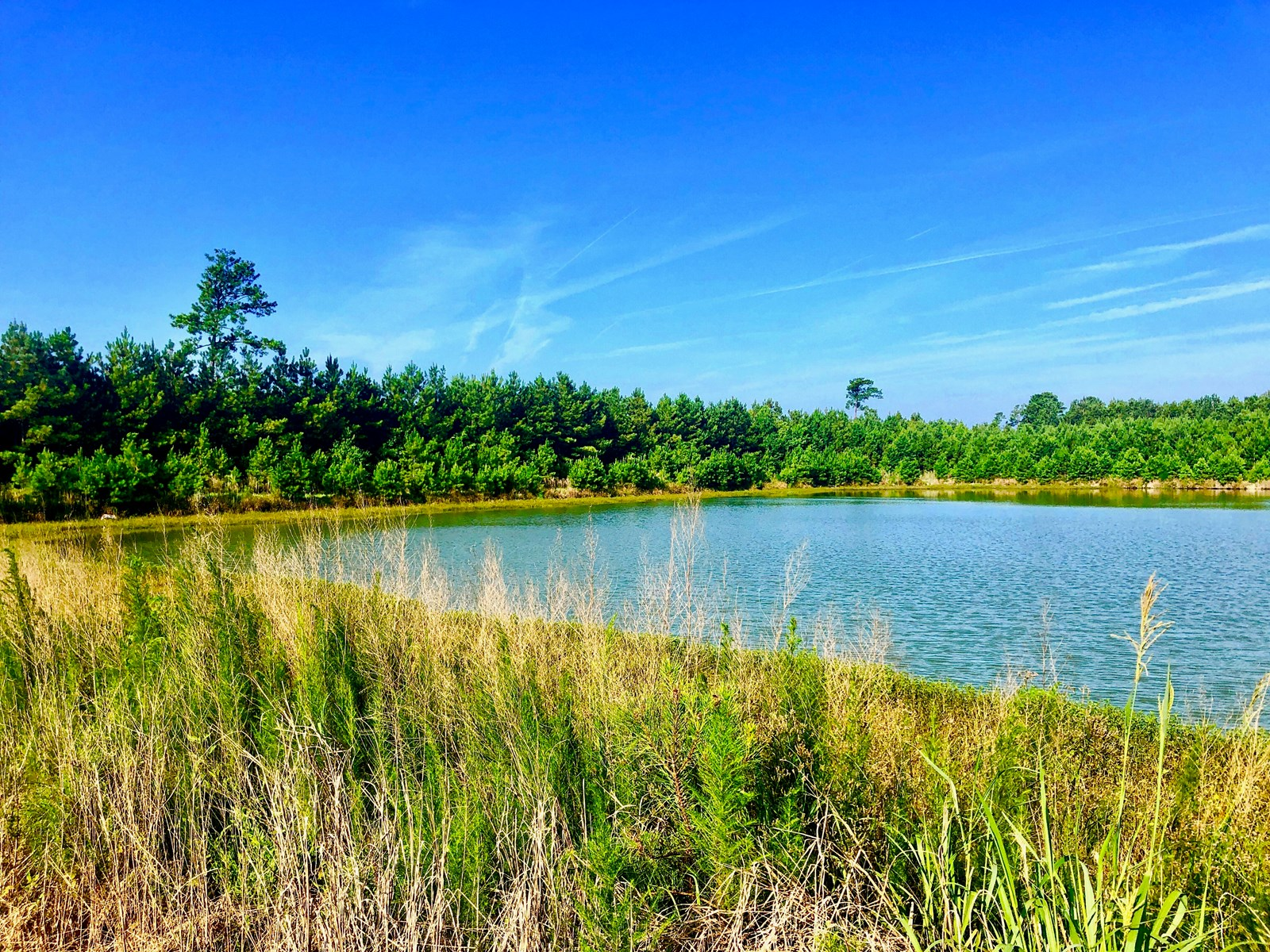 Duck Hunting Property in Martin County, NC/Big Game Tract