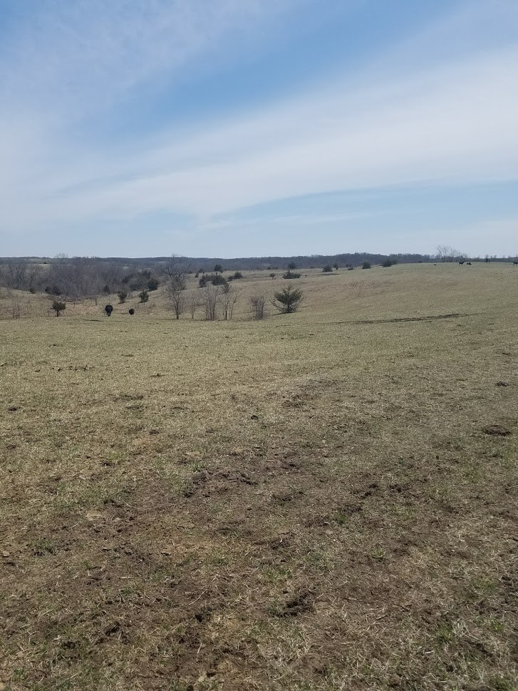 153 Acres of Pasture/Timber For Sale in Southern IA