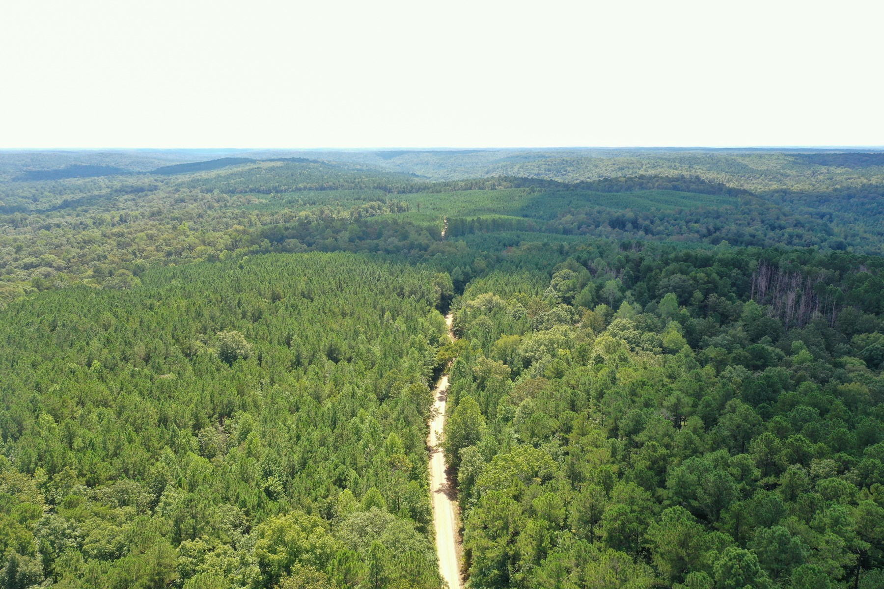 80 AC Hunting/Timberland Tract - Bankhead Forest Lawrence Co