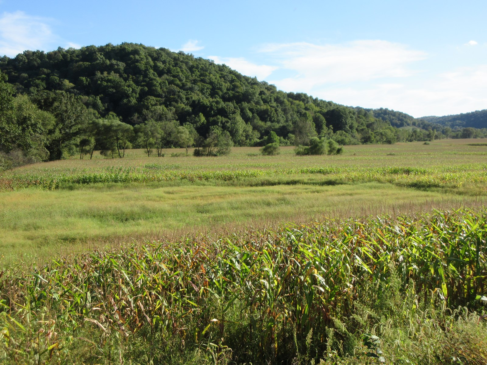 Tillable Land for Sale in Holmes County, Ohio with Hunting