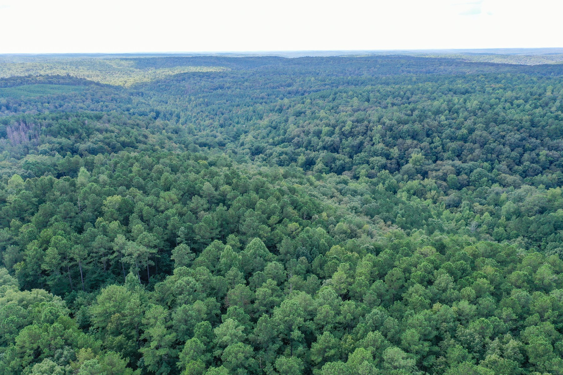 195 Acres in Bankhead National Forest Lawrence County AL