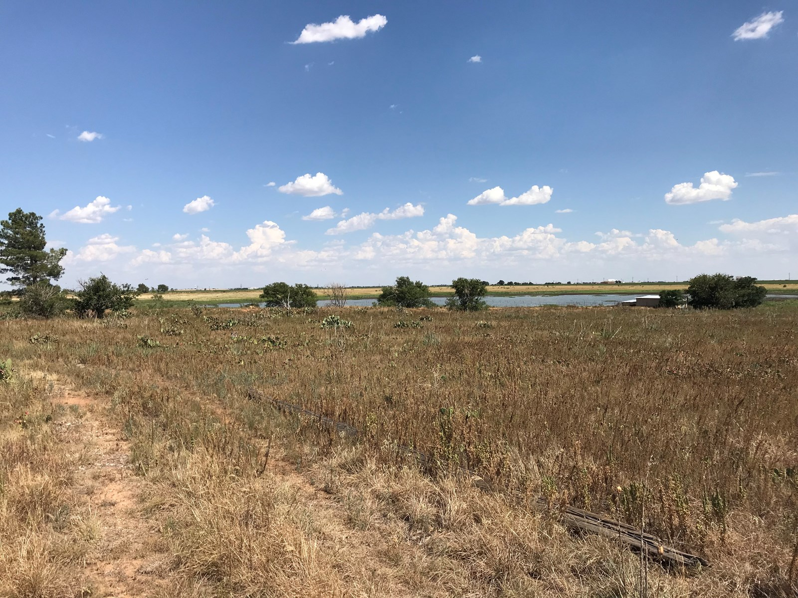 West Texas, Lubbock, Property, Farm, Ranch, Land for Sale