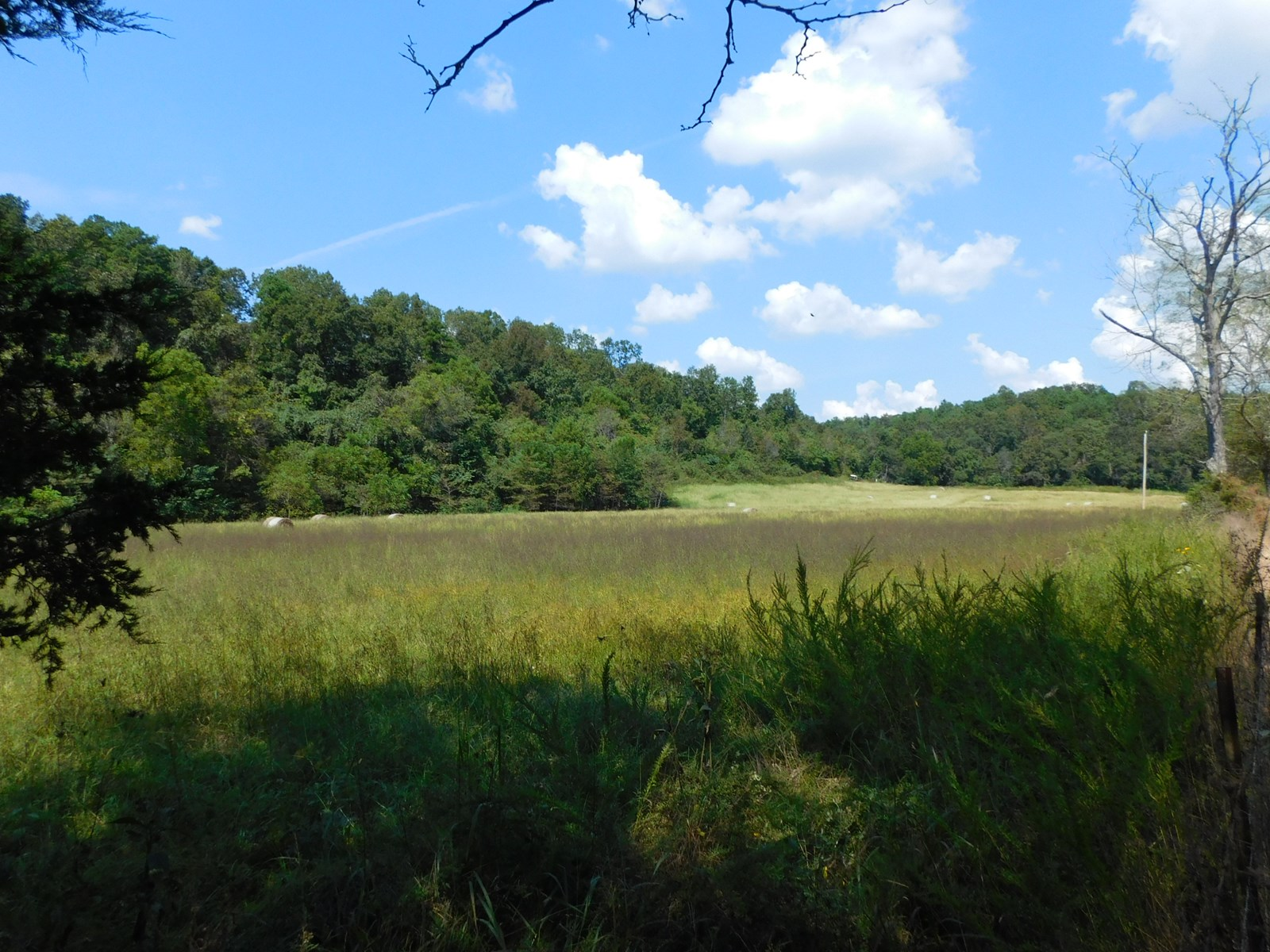 Land for Sale in the Southern MO Ozarks
