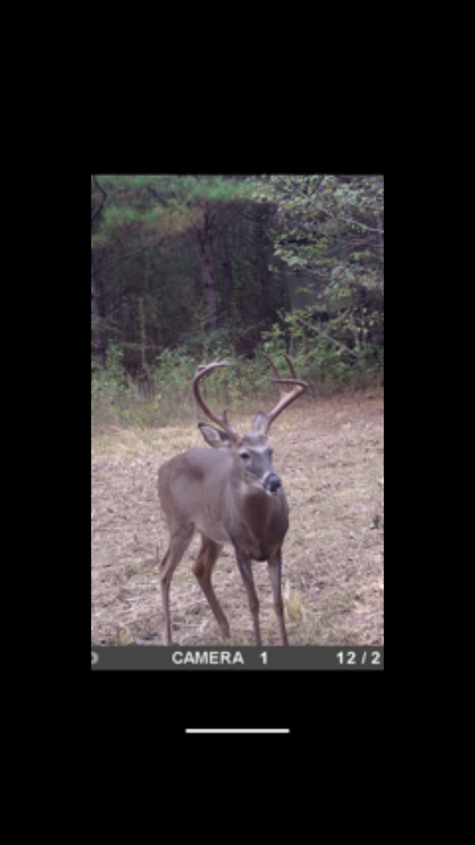 Land For Sale Hunting & Recreational Land Lincoln County MS