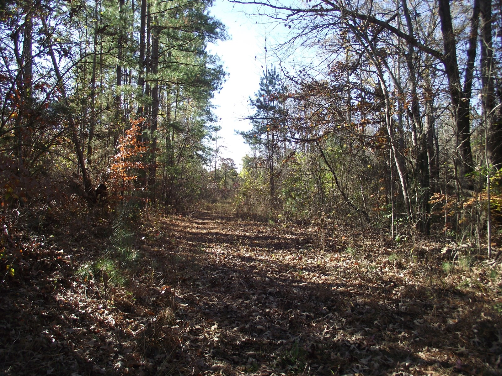 LARGE ACREAGE TN LAND TRACT, HUNTING, NO RESTRICTIONS