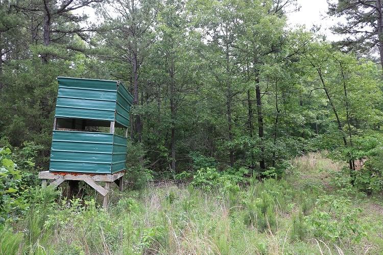 Hunting Acreage in Izard County