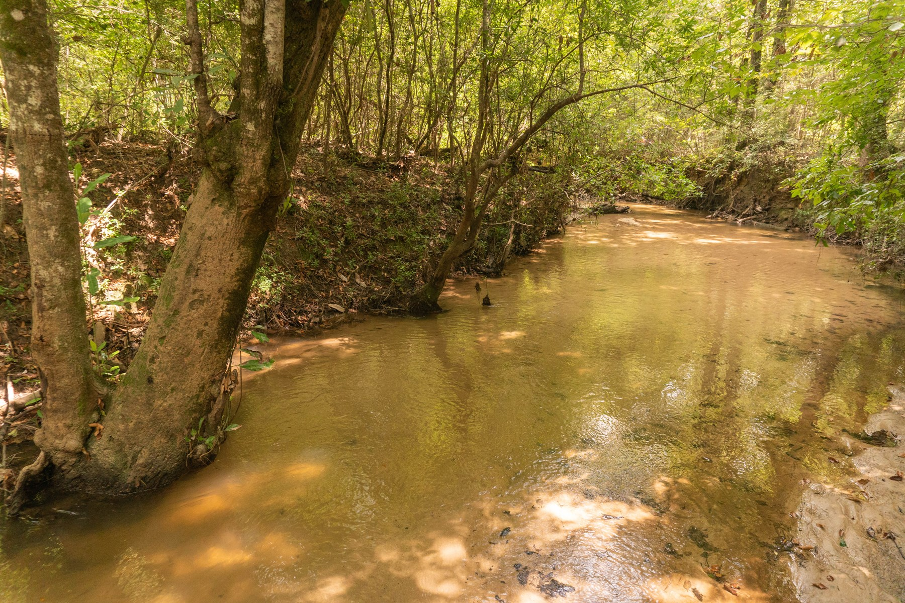 SECLUDED HUNTING LAND NEAR BOTH LAKES AND NATIONAL FOREST