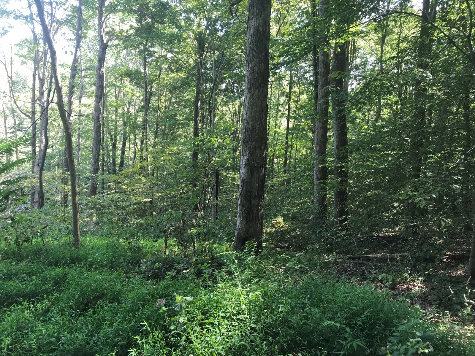 .75 Acres in Parkview Shores Sub-Division Scottsville KY