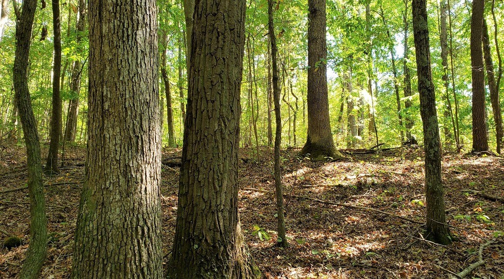 Dream Hunting and Recreation property in Adams County Ohio