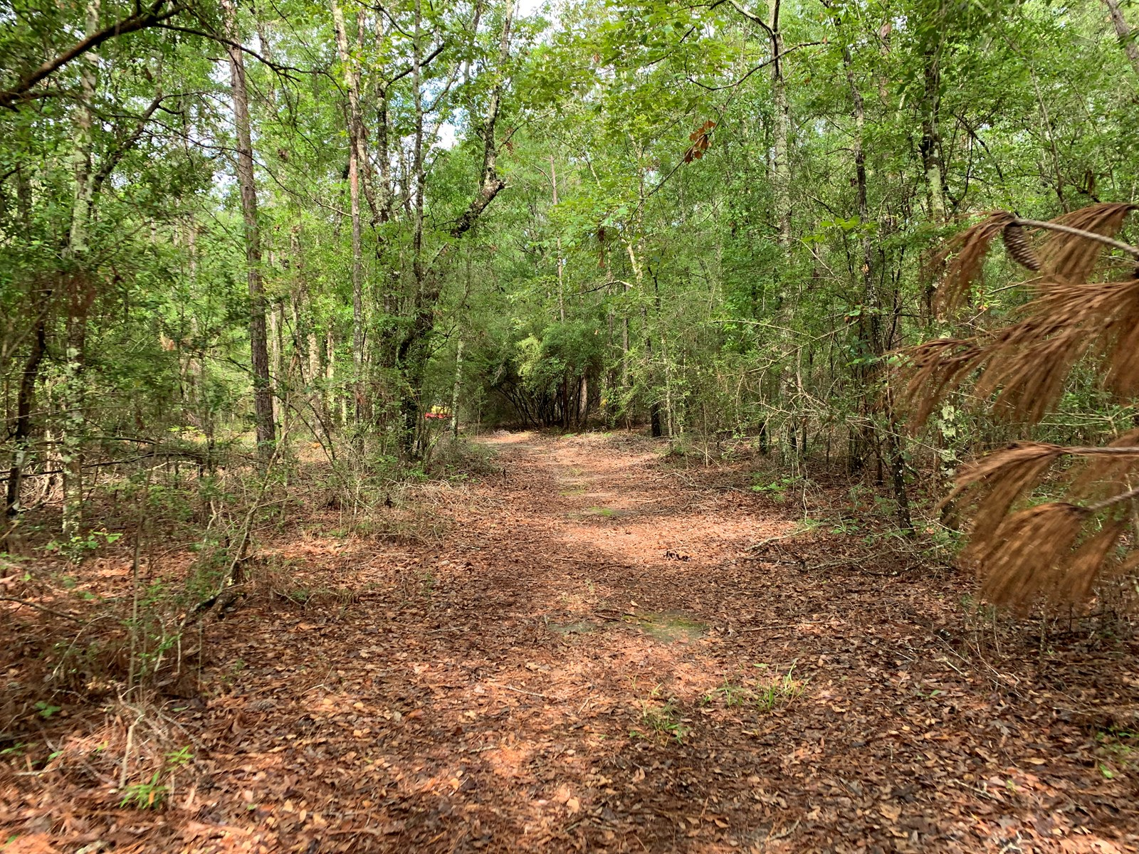 663ac Holmes County Florida Hunting Land - Deer - Turkey