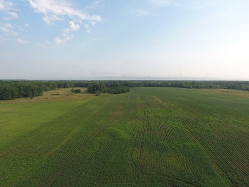 Wisconsin Hunting Land for Sale Wood County 80 Acres
