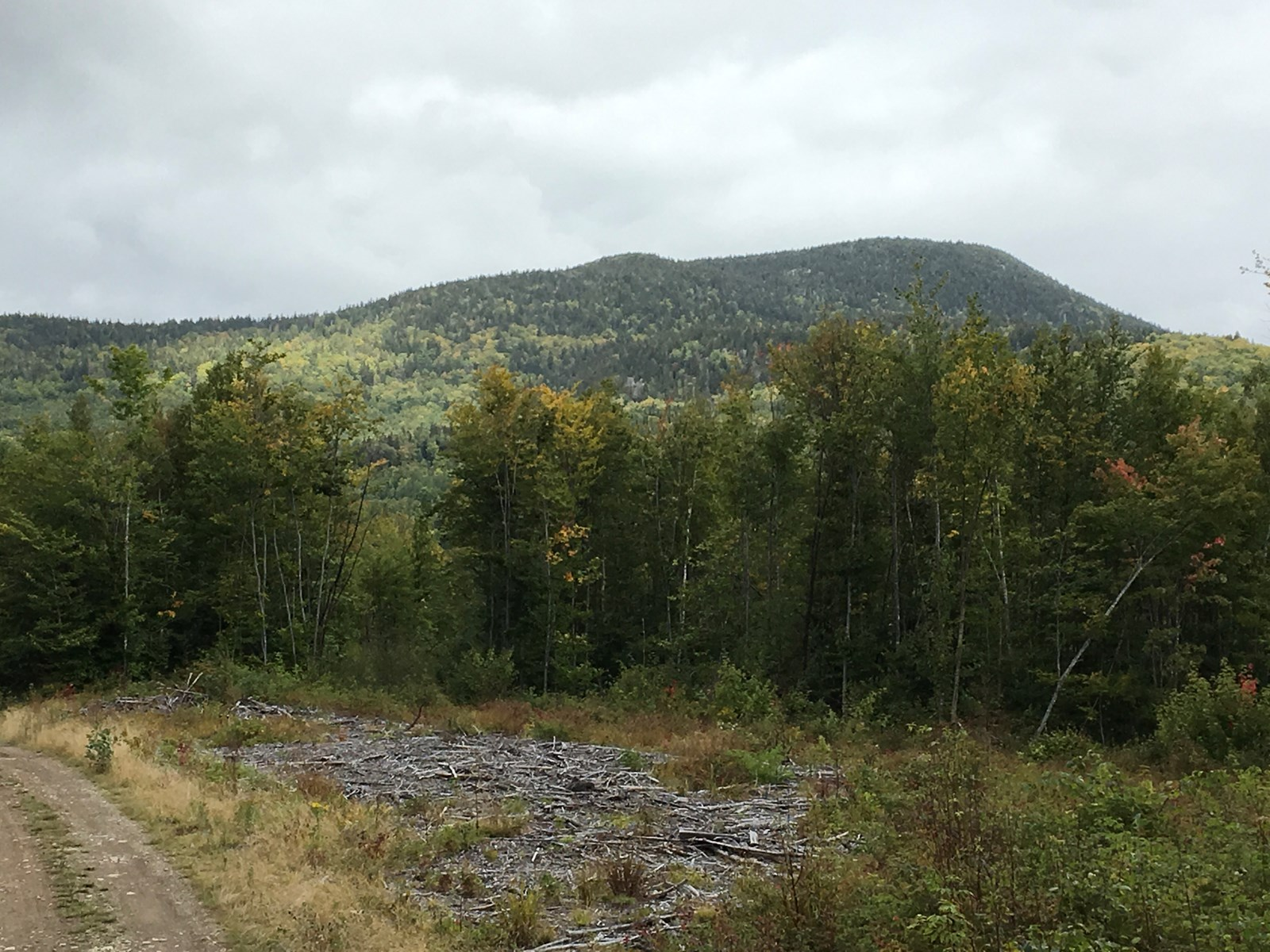 Mountain View Timberland For Sale in Maine