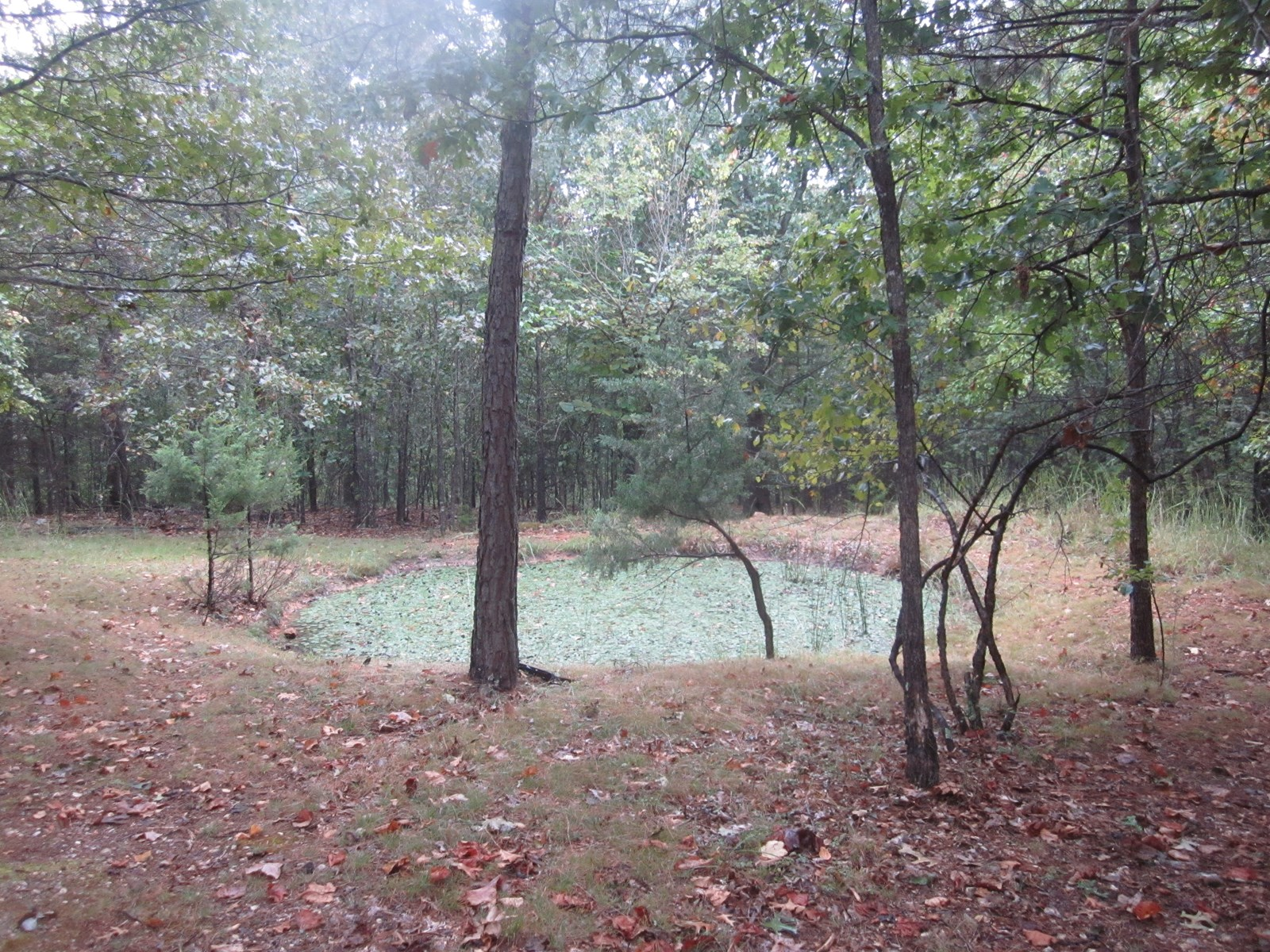 OZARK LAND FOR SALE WITH WELL AND SEPTIC ON SITE!