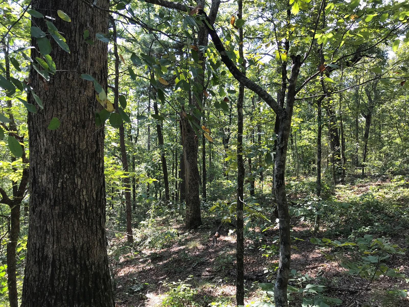 20 Acres Arkansas Hunting Land For Sale