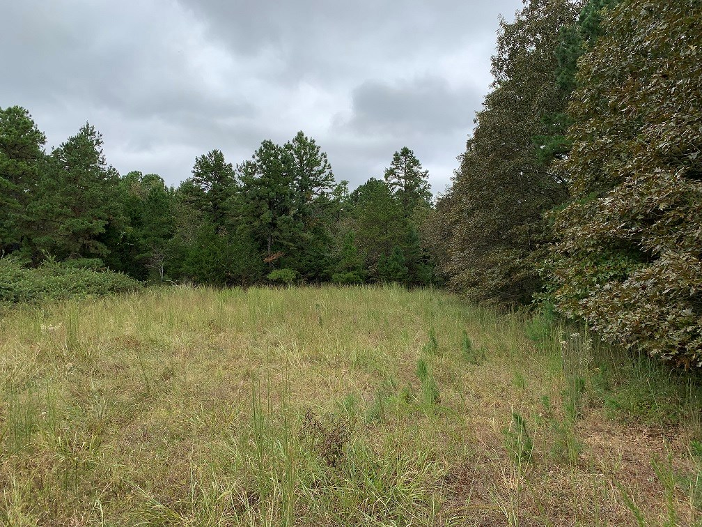 45 ACRES FOR SALE IN MELBOURNE, AR