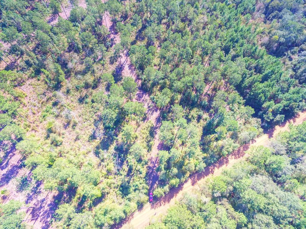 HUNTING LAND FOR SALE IN EAST TEXAS