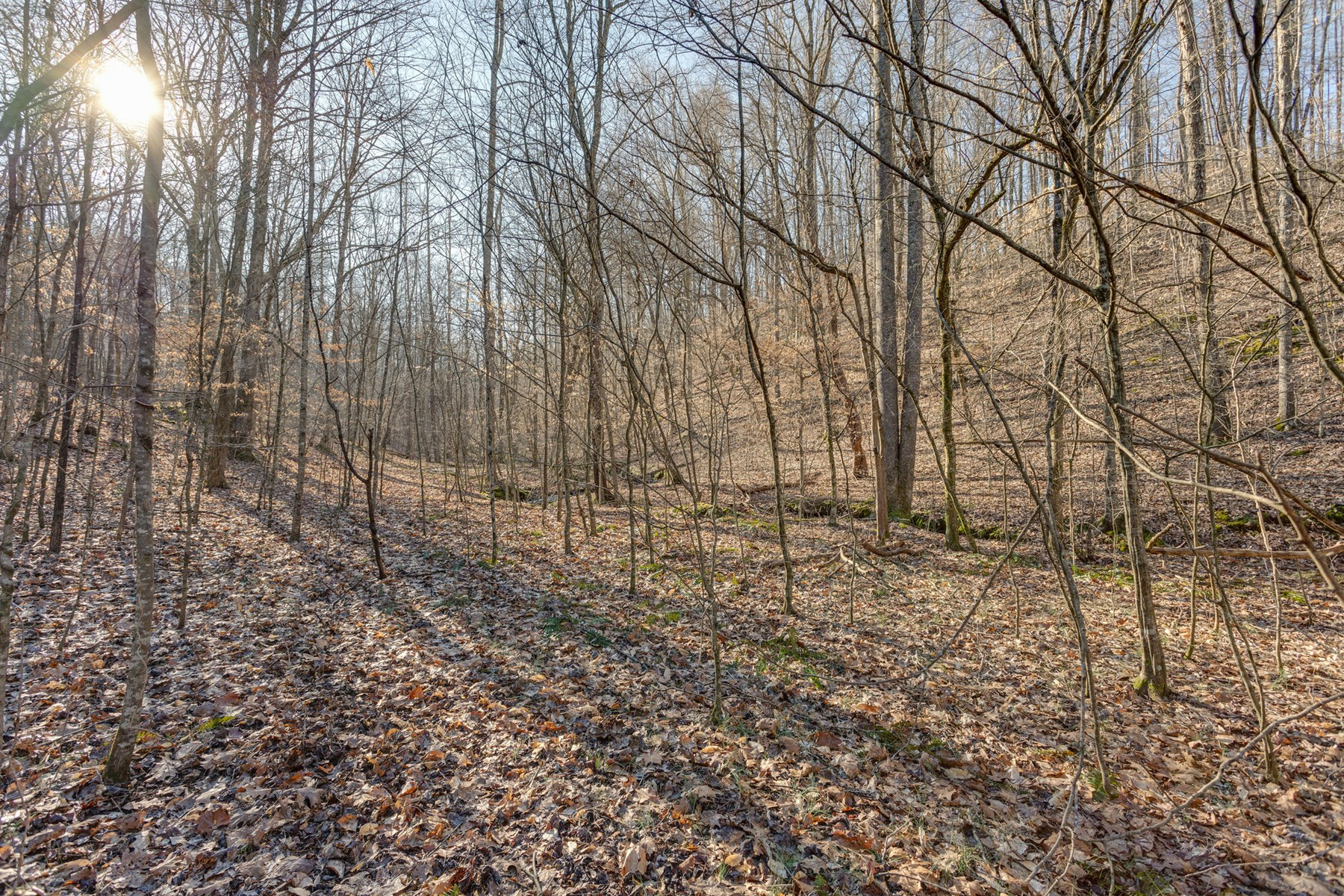 Prime Hunting Land for Sale in Lynnville, Tennessee