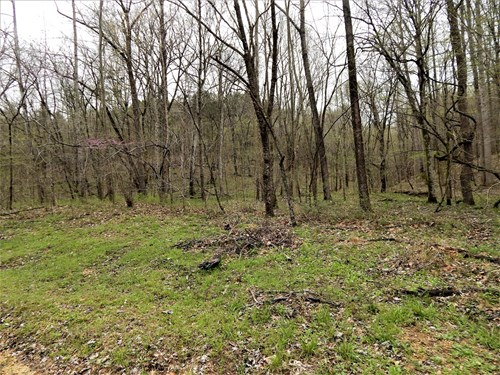 Hunting land for sale in TN!!!