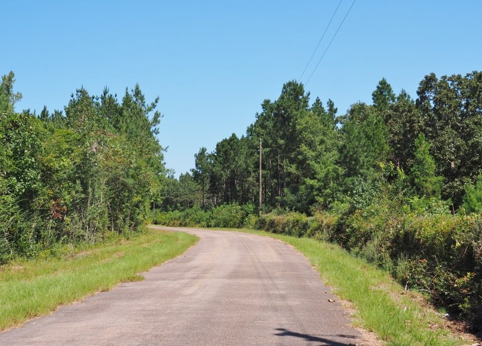 SW MS 34 Acres Hunting Property for Sale Pike County MS