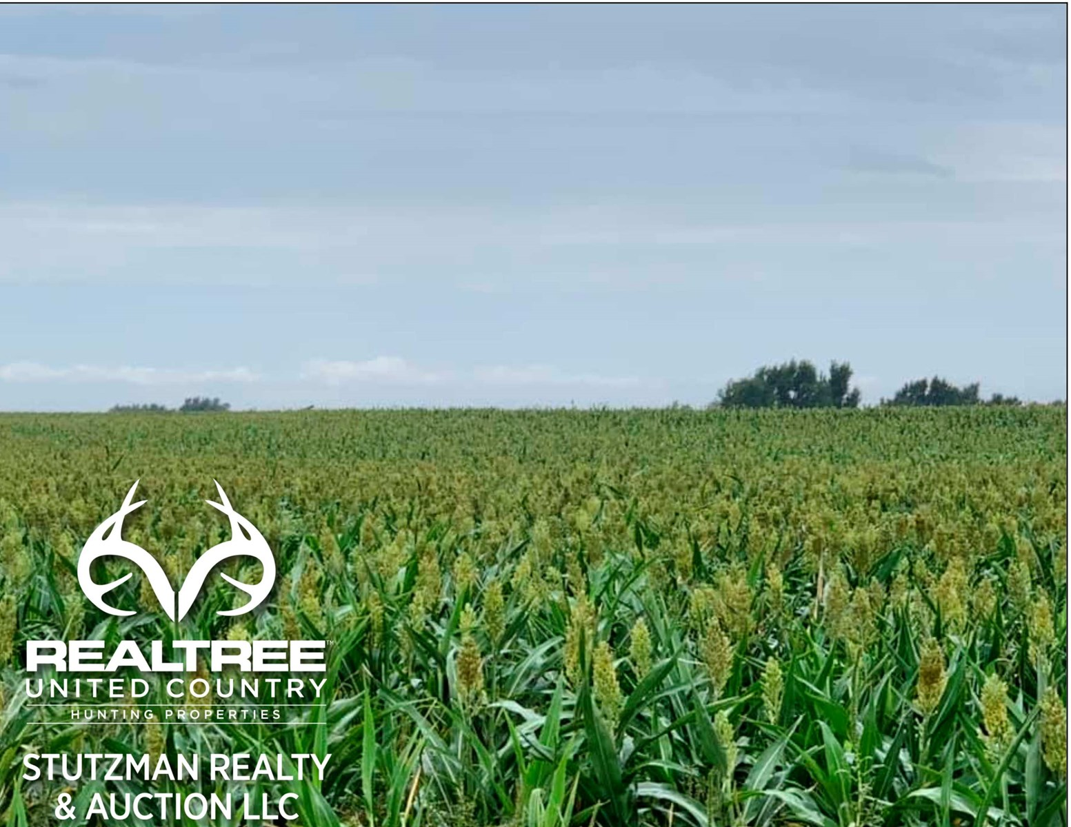 COMANCHE COUNTY, KS - FARMLAND / INVESTMENT OPPORTUNITY